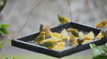 Colorful Tropical Birds Feeding On A Bird Table.