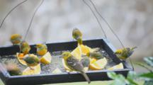 A Variety Of Birds At Feeder In Panama