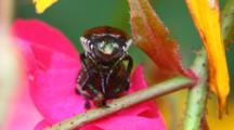 A Pair Of Japanese Beetles On A Rugosa Rose
