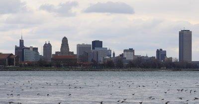 4K UltraHD Winter birds on Niagara River with Buffalo background