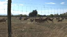 Rancher Enters Domestic Deer Farm