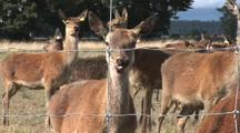 New Zealand Deer Farm