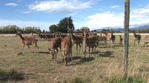 New Zealand Deer Farm