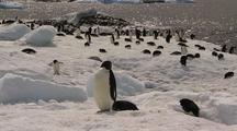 Adelie Penguins At Waters Edge, Inflatable Boat In Background