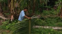 Preparing Palm Frond For Basket Weaving, Milne Bay, Papua New Guinea