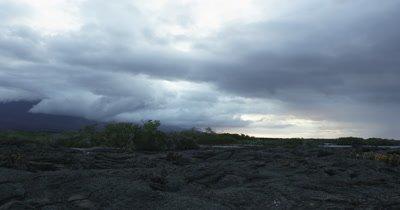 Galapagos Volcanic island cactus jib sideways