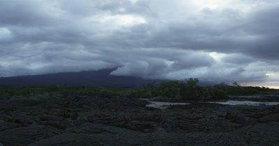 Galapagos Volcanic island cactus