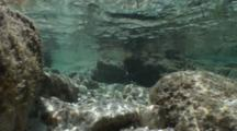 A Large Active Tidepool With Wave Action, Wave Ripples On Bottom, Silversides In The Distance, Nice Light