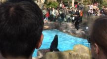A Sea Lion Show At The Barcelona Zoo, Spain, Crowd Shots