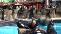 A Sea Lion Show At The Barcelona Zoo, Spain, Crowd Shots, Sealion Resting On Rocks