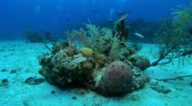Coral, Sea Fans And Sponges Attached To The Bottom Of A Rock On Sandy Bottom