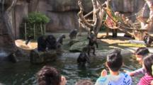 Chimpanzees (Pan Troglodytes Troglodytes) In A Natural Looking Enclosure Are Viewed By Zoo Guests, Guests Are Throwing Food