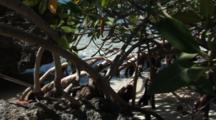 A Mangrove Root System With Water And Sand