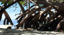 A Mangrove Root System With Water And Sand, Shot Zooms Out