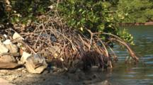 A Mangrove Root System With Water And Sand, Shot Zooms In