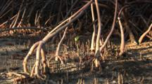 Wide Shot Of Mangrove Root System Zooming In To Close Up Of A Tiny Seedling