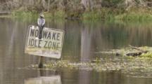 An Anhinga (Anhinga Anhinga) Rests On A Navigational Sign As Camera Moves By