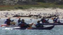 Kayakers Paddle Past A Beach Filled With Gulls And Dunes Covered By Vegitation