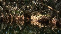 A Mangrove Root System With Shafts Of Sunlight Penetrating