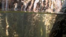 Split Shot Of Small Mangrove Fish Swimming Around Root System In Sunlight