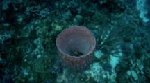 Shot Zooms Into A Giant Vase Sponge