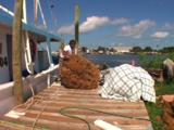 Tarpon Springs Florida - Sponge Fisherman Rolling Giant Ball Of Sponge Off Dock