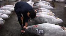 Tsukiji Fish Market, Tokyo - Handheld Shot Of Frozen Tuna Being Inspected On Auction Floor