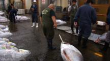 Tsukiji Fish Market, Tokyo - Handheld Shot Of Frozen Tuna Being Moved Before Tuna Auction