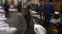Tsukiji Fish Market, Tokyo - Handheld Shot Of Frozen Tuna Being Moved Before Tuna Auction
