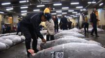 Tsukiji Fish Market, Tokyo - Low Angle, Handheld Shot Of Frozen Tuna Being Inspected By Buyers
