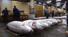 Tsukiji Fish Market, Tokyo - Low Angle, Handheld Shot Of Frozen Tuna On Auction Floor