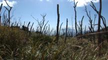 Miyake Jima, Japan - The Island Of Mikura As Seen Through The Burnt Trees Of Volcanic Destruction