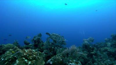 Edited reef fotage