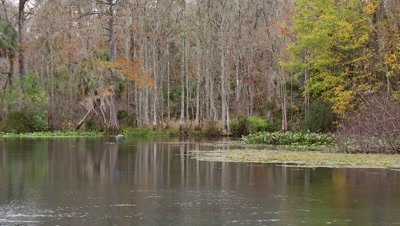 Edited Content - Florida Springs