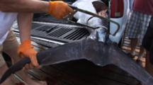 Fishing - Tail Of Marlin In The Process Of Being Removed With A Hand Saw