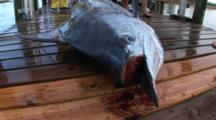 Fishing - Marlin On A Dock With Bill Removed