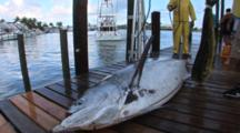 Marlin On Dock