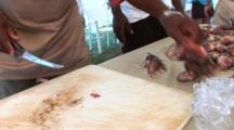 Lion Fish Being Cleaned On A Cleaning Table, Close Up