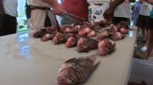 Lion Fish Being Assembled On A Table In Rows, Hand Held & Low Angle