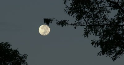 A full Moon Seen Through Tropical Trees