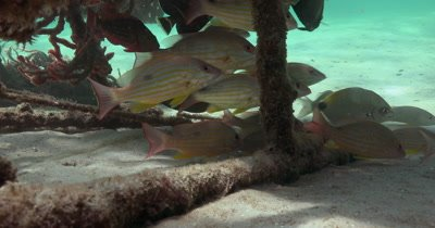 Reef Fish congregate on man-made structure