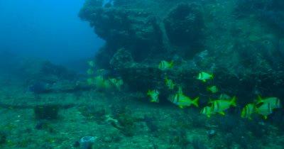 Ship Wrecks Along Coastal Florida Provide Diverse Habitat for Marine Animals