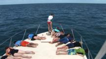 Passengers On Bow Of Boat Watch Atlantic Spotted Dolphins (Stenella Frontallis) Bow Riding