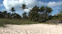 Palm Trees And A Sandy Beach Near Bimini
