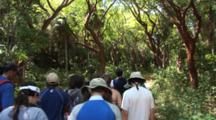 School Group Walking Through A Nature Trail In A Tropical Jungle