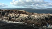 Colony Of South American Sea Lions, Otaria Flavescens, At Isla De Los Lobos, Beagle Channel, Ushuaia, Argentina.