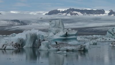 Glacier Bay, southern Iceland, showing glaciers broken off of Eyjafjallajokull glacier drifting and melting.