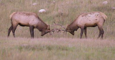 Elk John Banovich, DGC, CSC, BA Film Stock Footage
