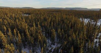 4K Aerial fly back over Boreal forest in winter - NO Colour Correction