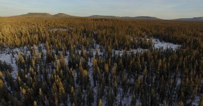 4K Aerial forward over Boreal forest in winter - NO Colour Correction